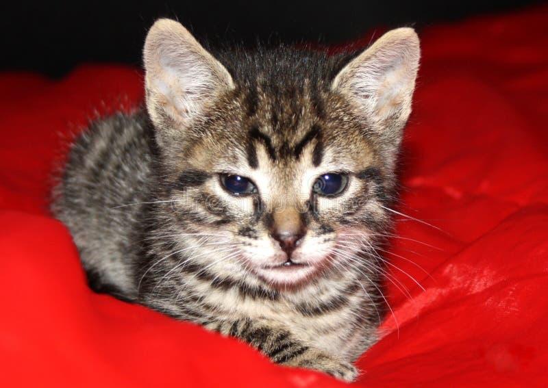 Meu gatinho pequeno da ilha em Tenerife imagens de stock