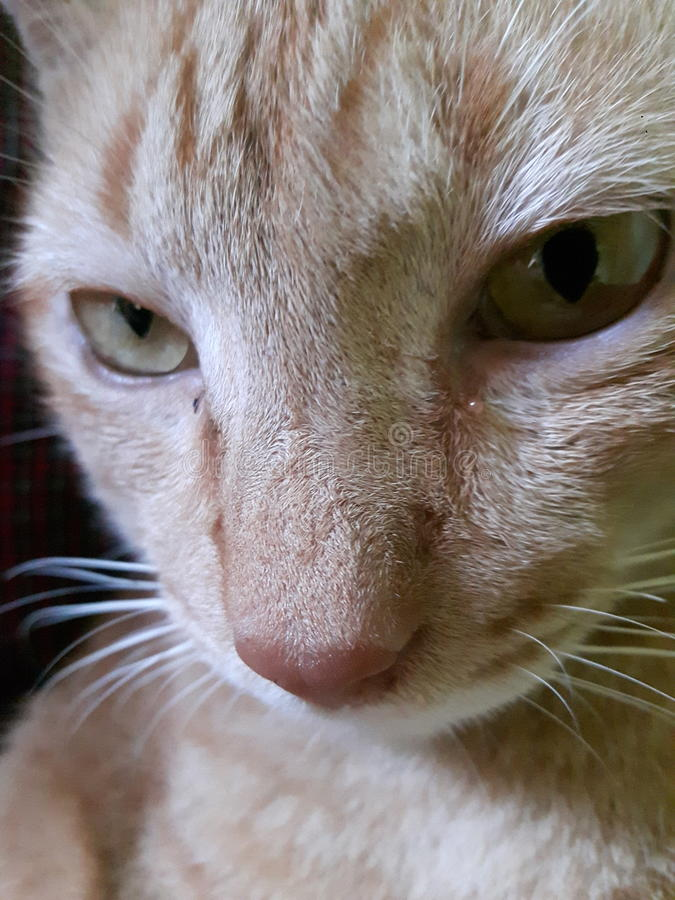 Meu gato fotos de stock royalty free