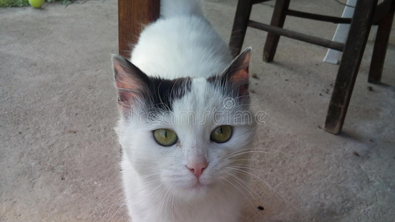 Meu gato bonito imagem de stock royalty free