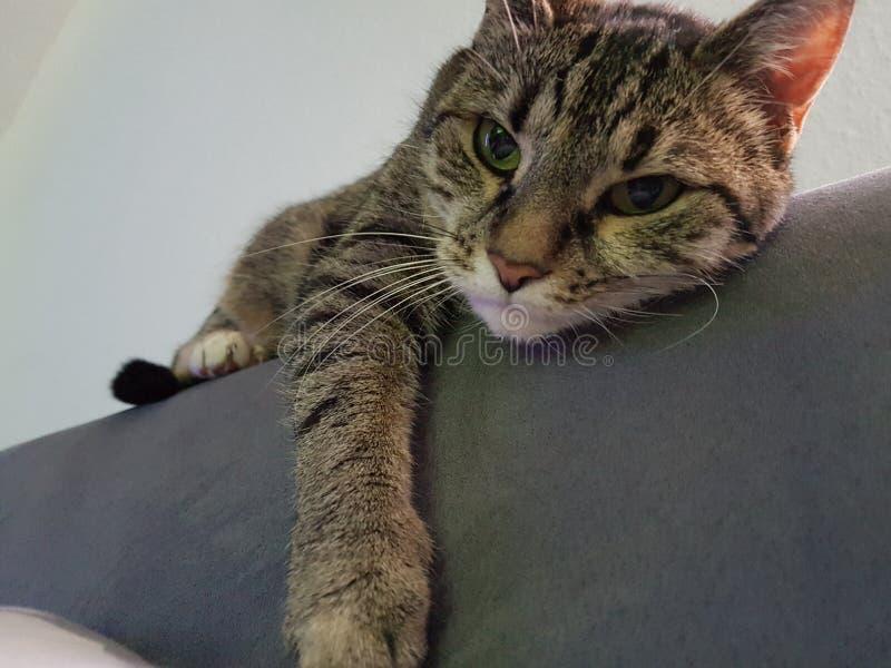 Meu gato de refrigeração doce fotografia de stock royalty free