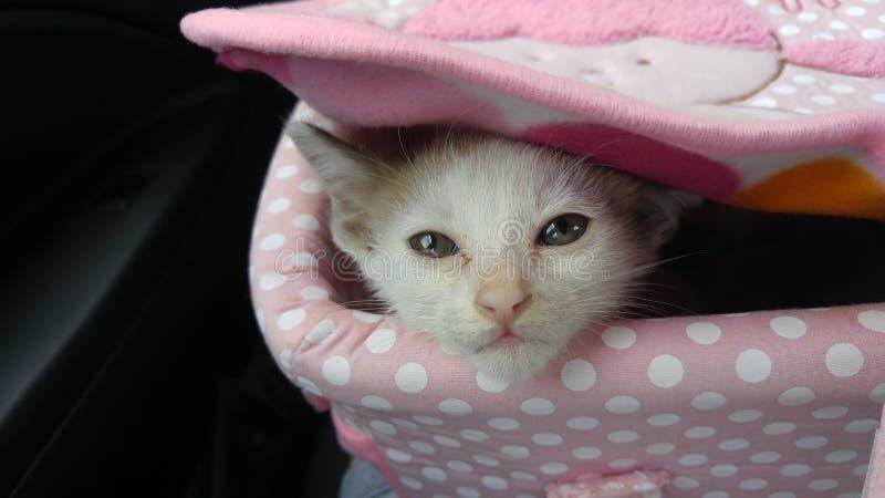 Meu gato pequeno imagem de stock royalty free