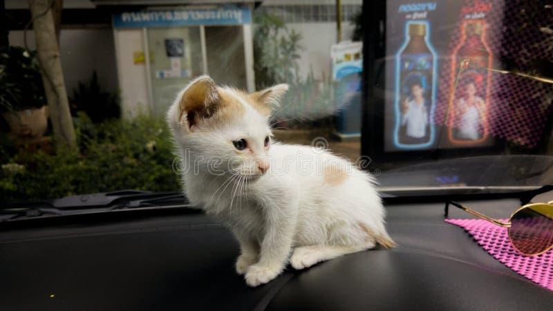 Meu gato pequeno foto de stock royalty free