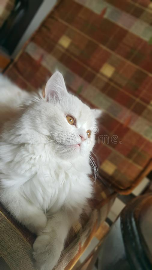 Meu gato que travam ao sol e a rua compram-no fotografia de stock royalty free