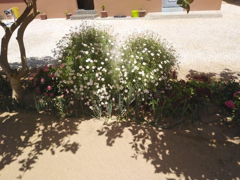 Meu jardim hoje em morocco fotos de stock royalty free