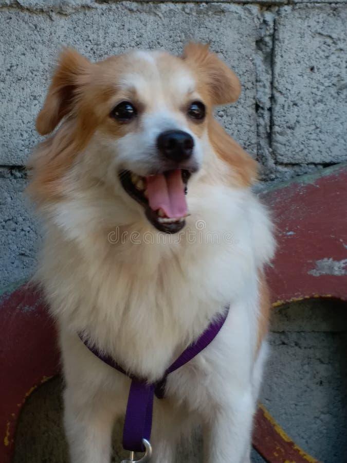 Meu lindo e adorável cão fotos de stock