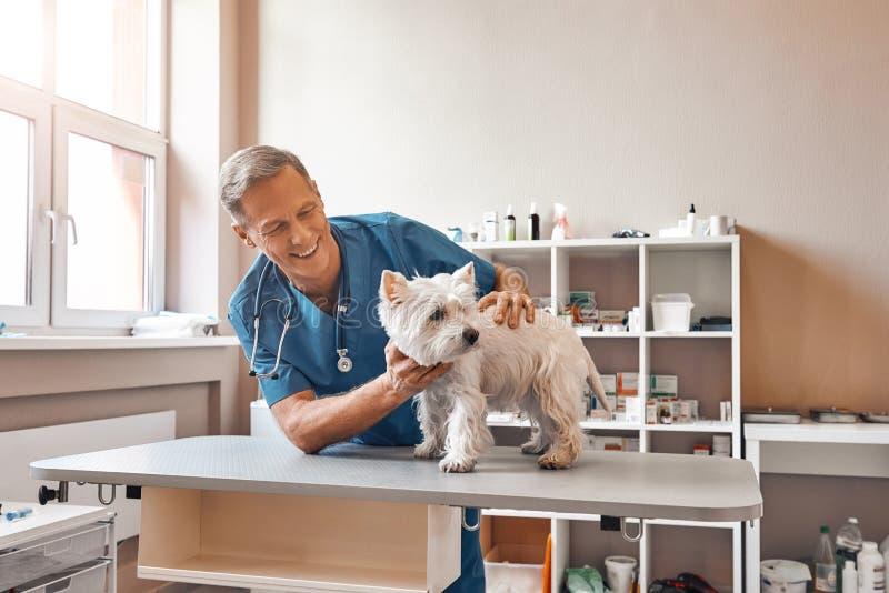 Meu paciente bonito Veterinário envelhecido médio alegre que olha com sorriso na posição pequena do cão na tabela na clínica vete fotografia de stock
