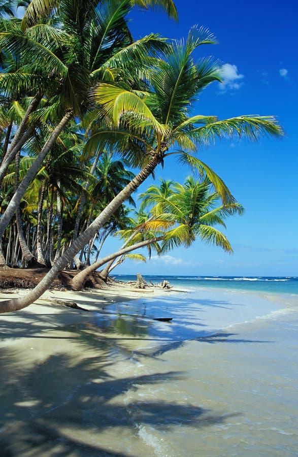 meu paraíso