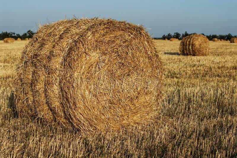 Meule de foin dans un domaine de blé photo stock