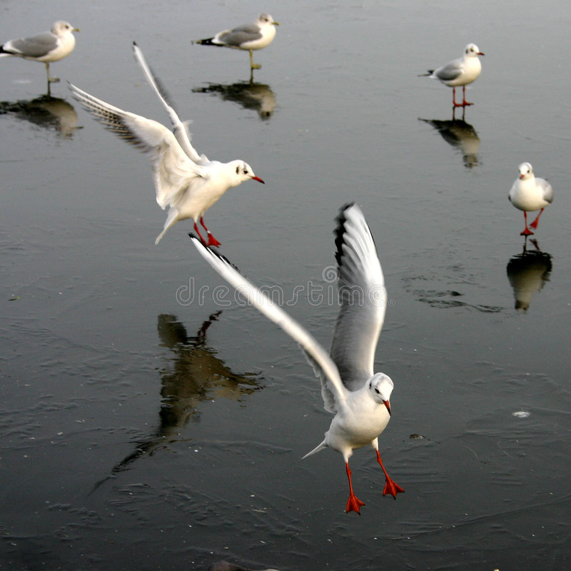 mewa ptaka zdjęcie stock