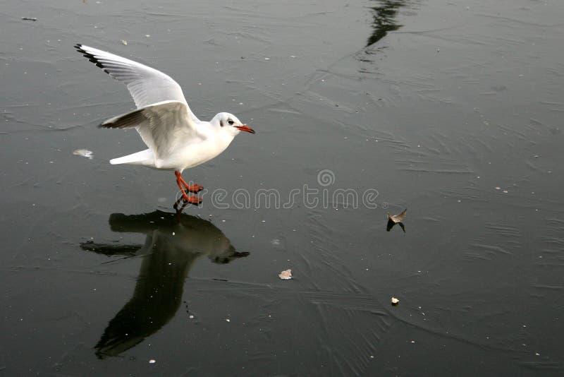 mewa ptaka fotografia stock