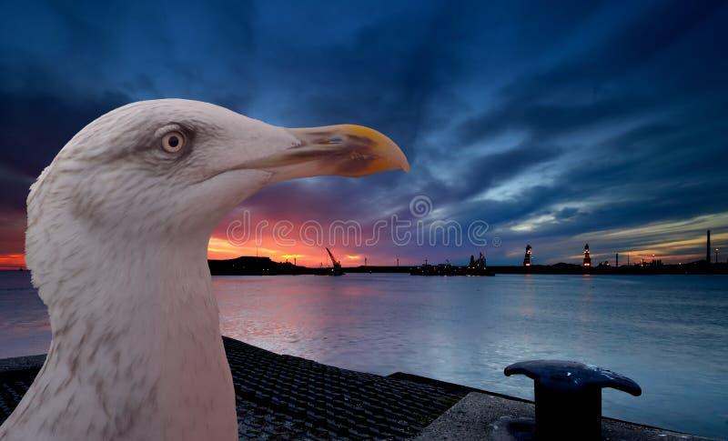 mewa słońca zdjęcie royalty free