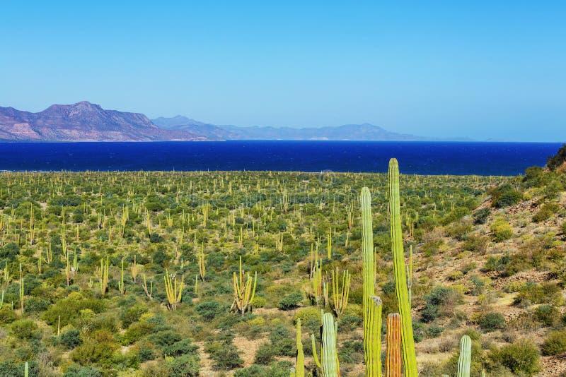 Mexicaanse kust stock foto's