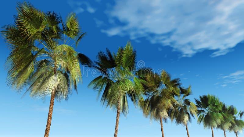 Mexicaanse palmen tegen de hemel, tropisch panorama royalty-vrije stock fotografie