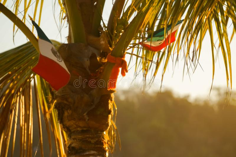 Mexicaanse vlag op een palm royalty-vrije stock afbeeldingen
