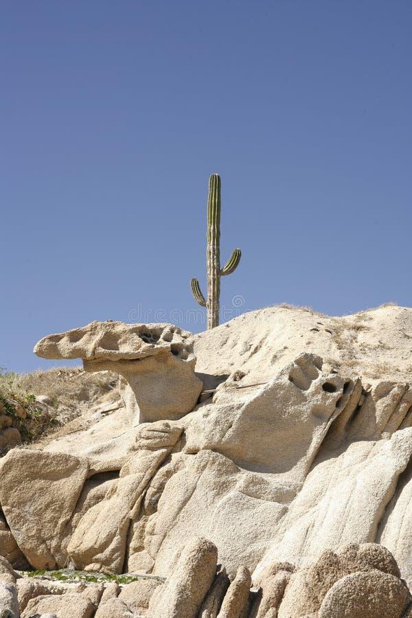 Mexicaanse woestijn stock foto's