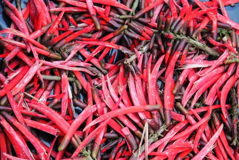 Mexicain d'un rouge ardent Chili Peppers sur la stalle du marché images stock
