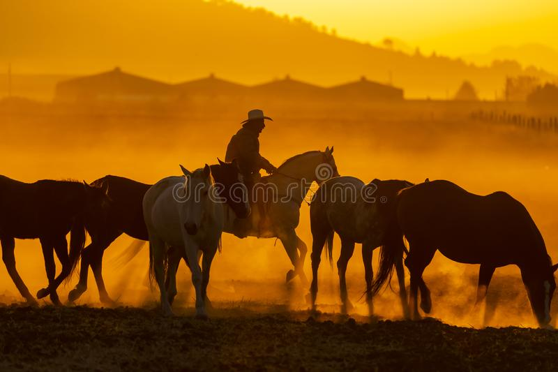 A Mexican Charro Cowboy Rounds Up A Herd of Horses Running Through The Field On A Mexican Ranch At Sunrise stock image