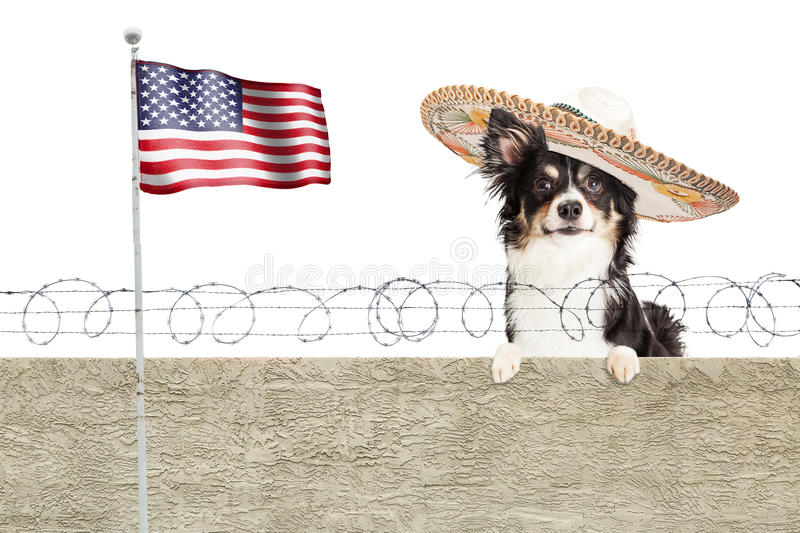 Mexican Chihuahua Dog Over Border Fence stock photography