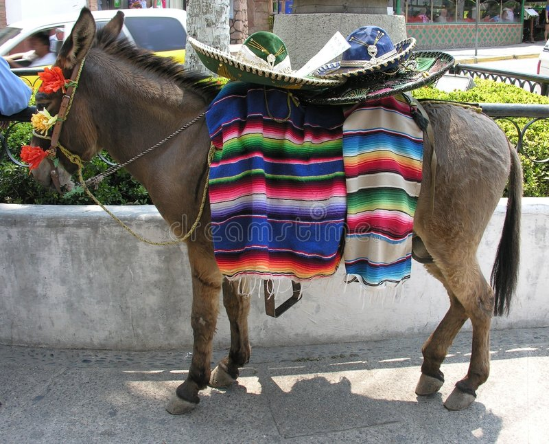 Mexican Donkey royalty free stock images