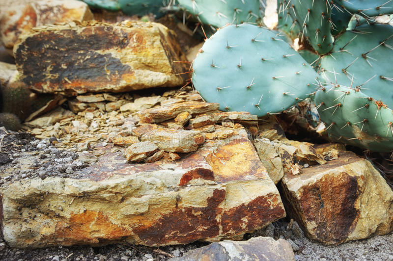 Mexican nature with cactus royalty free stock image