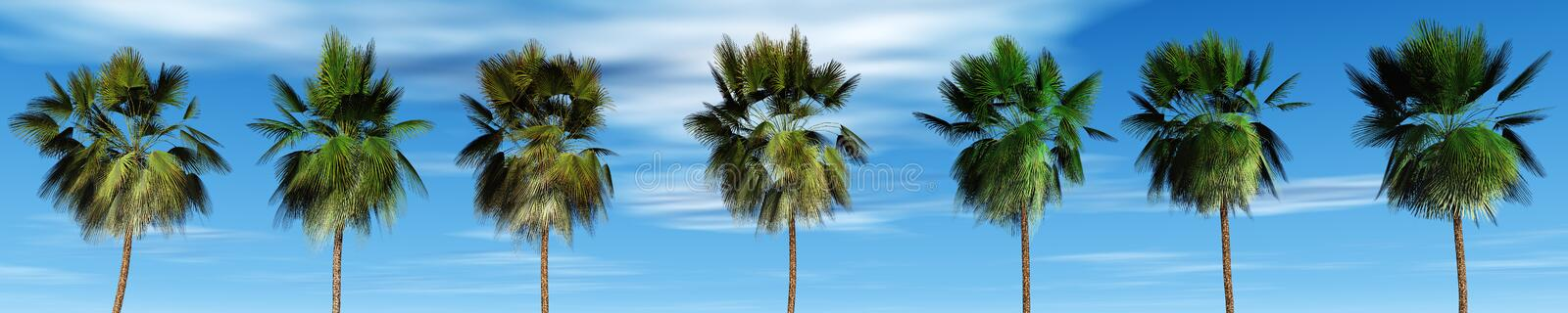 Mexican palm trees against the sky, tropical panorama. 3D rendering. panorama of palm trees royalty free stock photos