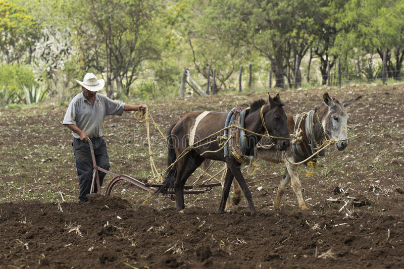 Mexican peasant royalty free stock images