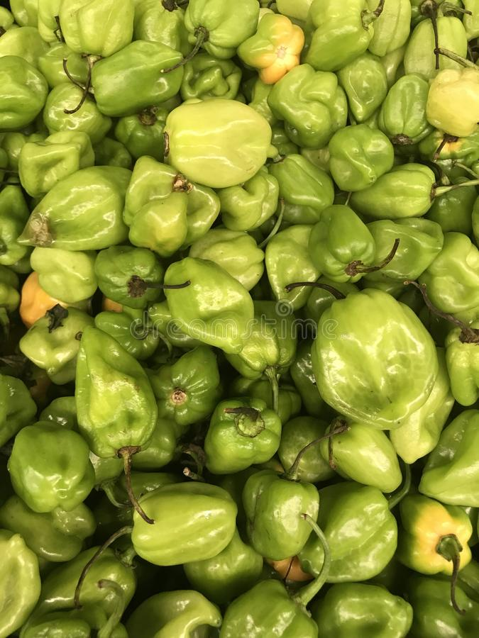 Mexican pepper habanero stock images