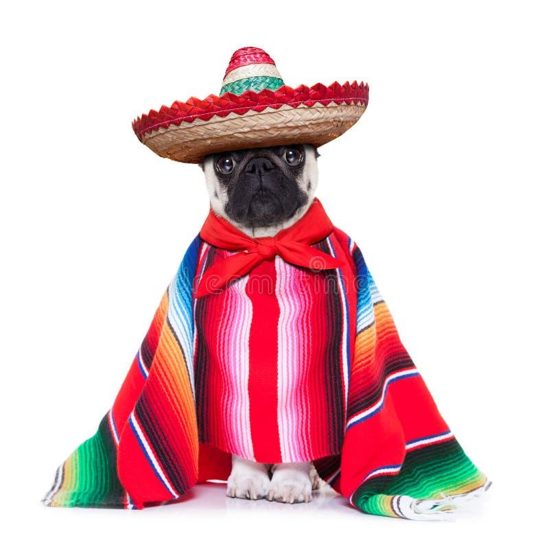 Mexicansk hund arkivfoto