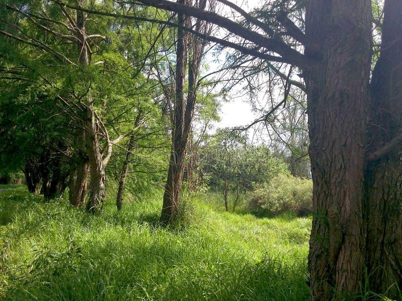 Mexicansk skog royaltyfria foton