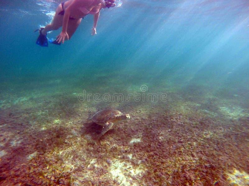 Mexicansk undervattens- simning för havssköldpadda med flicka 2 royaltyfria foton