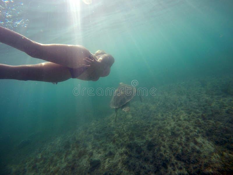 Mexicansk undervattens- simning för havssköldpadda med flicka 3 fotografering för bildbyråer