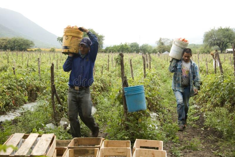 Mexicanska bönder royaltyfri bild