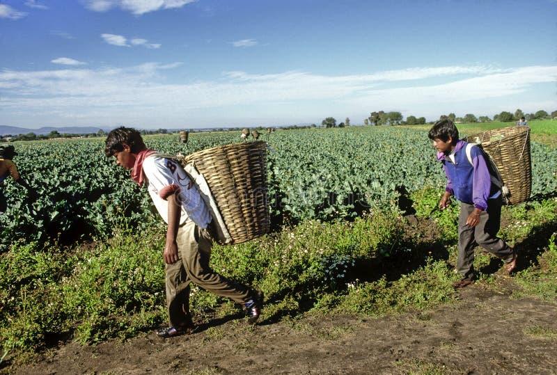 Mexicanska bönder arkivbilder