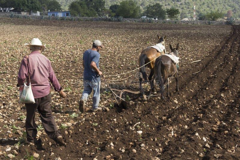 Mexicanska bönder royaltyfria bilder