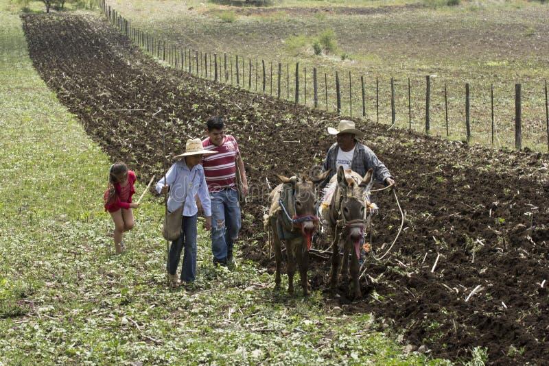 Mexicanska bönder arkivfoton
