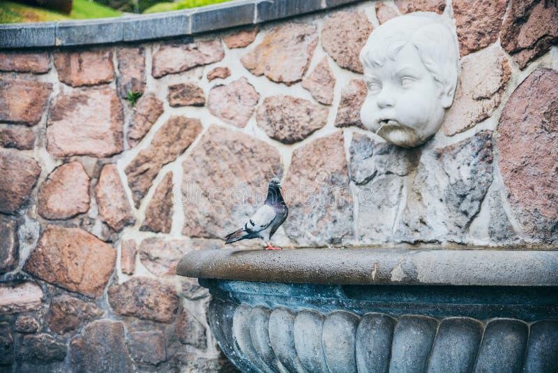 MEXICO - SEPTEMBER 20: Pidgeon die zich naast een fontein met het standbeeld van een boze engel bevinden die water werpen uit zij stock foto's