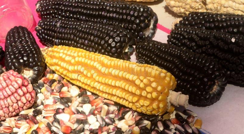 Mexikanische Maisverschiedenartigkeit, weißer Mais, schwarzer Mais, blauer Mais, roter Mais, wilder Mais und gelber Mais an einem lizenzfreie stockfotografie
