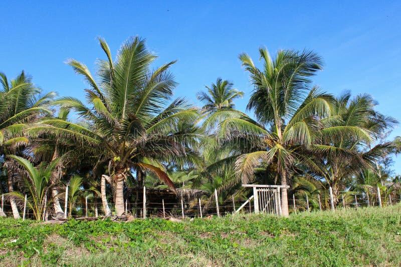 Mexikanische Strand-Szene stockbild