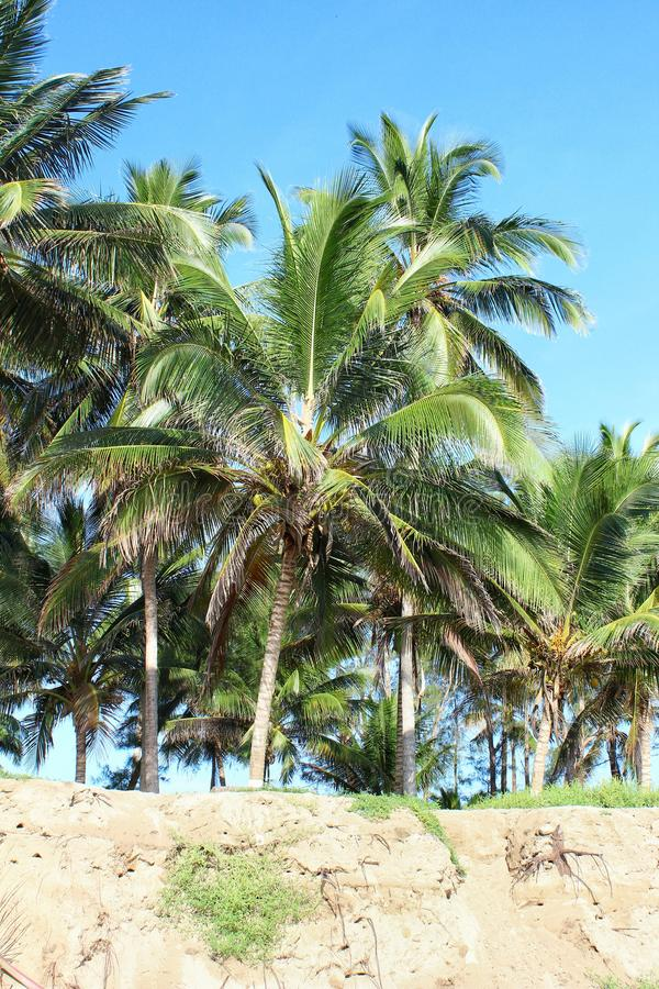 Mexikanische Strand-Szene lizenzfreie stockfotos