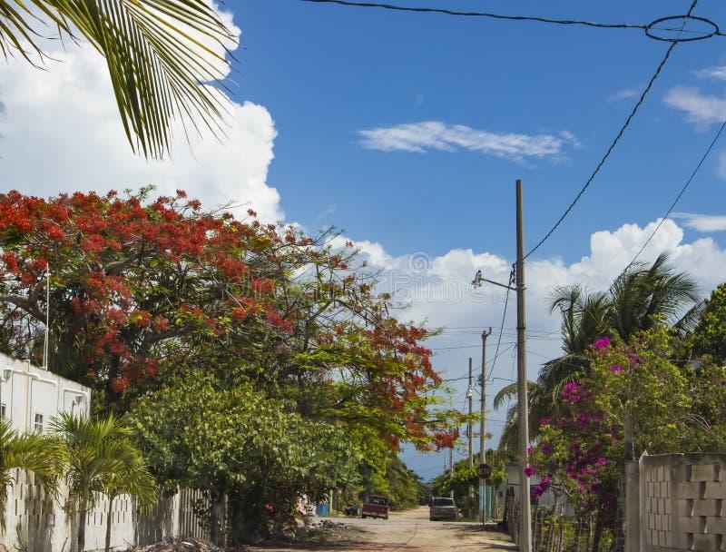 Mexikanische villiage Schmutzstraße mit dem Auto und LKW geparkt und Alto Stopp-Zeichen - viele blühende Bäume und tropisches Lau lizenzfreies stockfoto