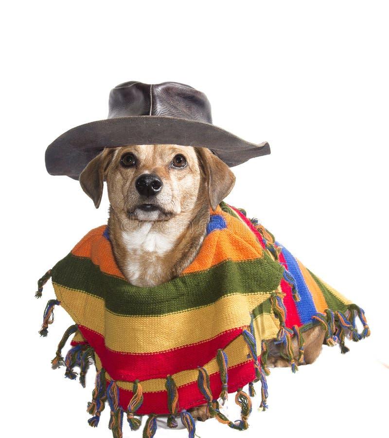 Download Mexikanischer Hund stockbild. Bild von angekleidet, dachshund - 27728881