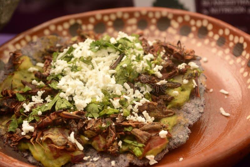 Mexikanischer Taco der Heuschrecke, essbarer Insektentortillatoast gemacht mit blauem Mais und mit Guacamolen, Käse und Koriander lizenzfreie stockfotos
