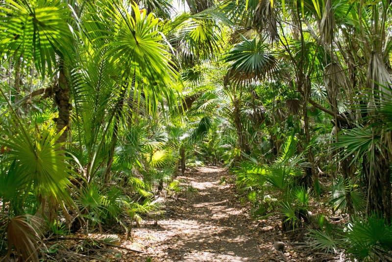 Mexikanischer tropischer Regenwald voll von Palmen lizenzfreies stockbild
