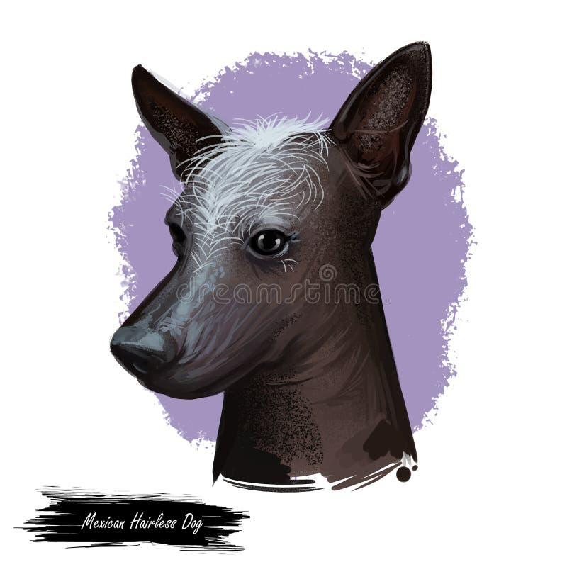 Mexikanischer unbehaarter Hund, Zucht xoloitzcuintli, digitale Kunstillustration Xoloitzcuintli-xolo Haustierreinrassiges tier de vektor abbildung