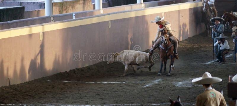 Mexikanisches charro, das ein Kalb abreißt stockfotos