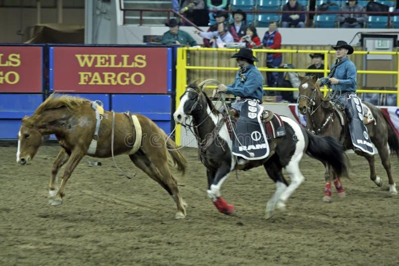 mexikanskt nationellt västra rodeoshowmateriel arkivfoto