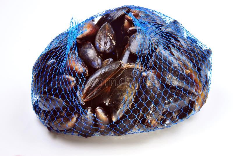 mexilhão orgânico fresco de e em uma rede azul fotos de stock