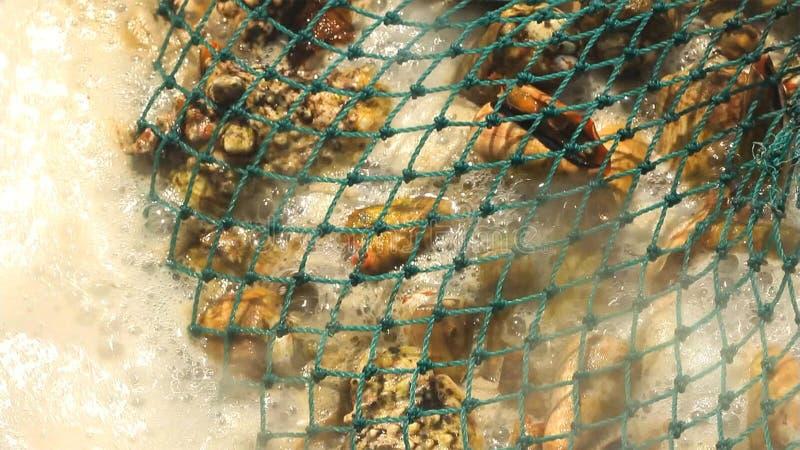 Mexilhões fervidos nos escudos em uma rede no fogão fotos de stock
