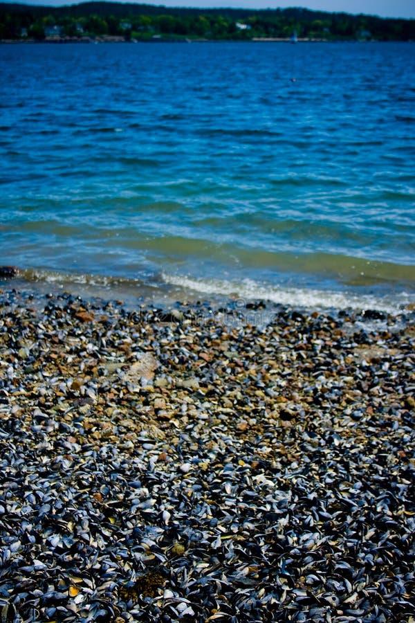 Mexilhões na linha costeira no porto Maine da barra foto de stock royalty free