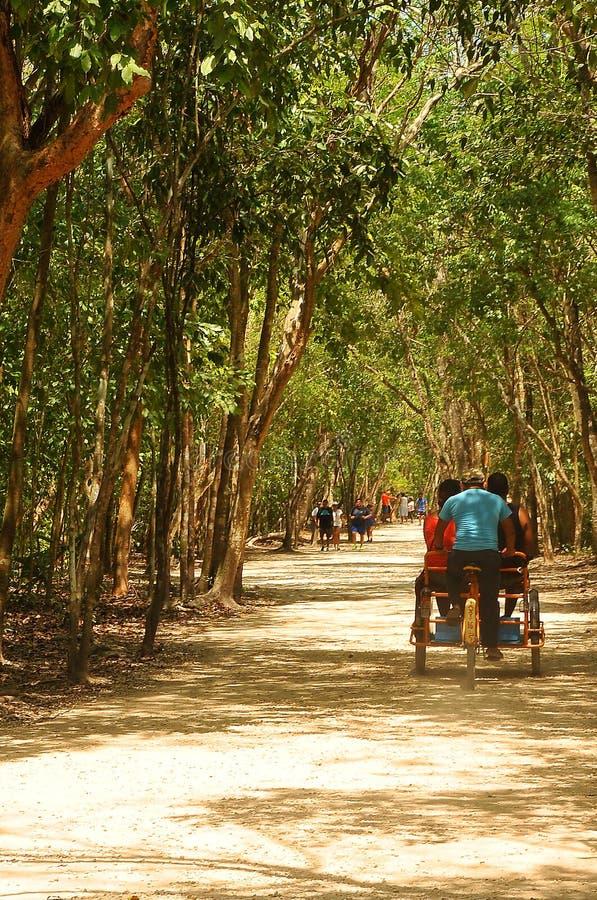 Mexique, ταξί στην ανάβαση πυραμίδων Coba στοκ εικόνες